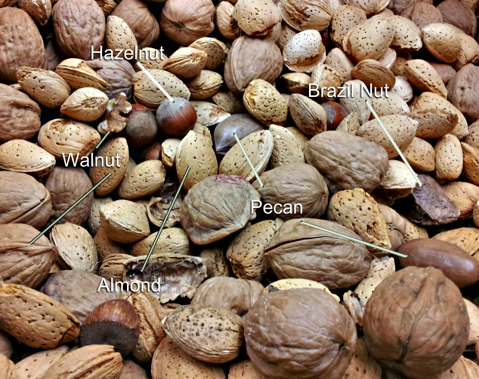 Consume Fewer Calories with Shelled Nuts